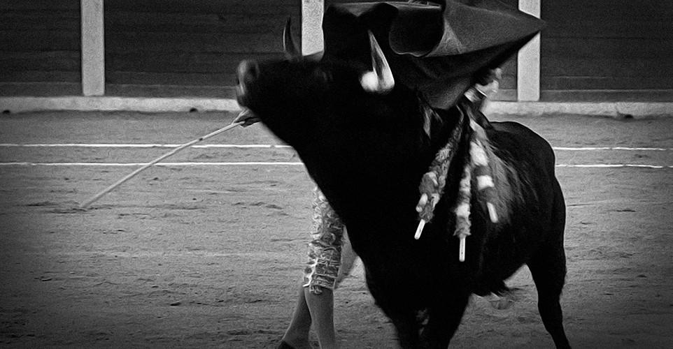 f_¿Bullfighting;_A_Cultural_Tradition.jp