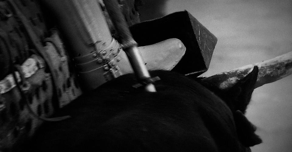 i_¿Bullfighting;_A_Cultural_Tradition.jp