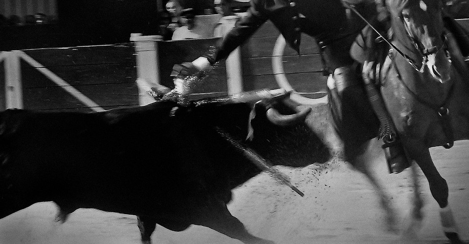 k_¿Bullfighting;_A_Cultural_Tradition.jp