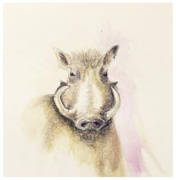 Aardvark - 2016