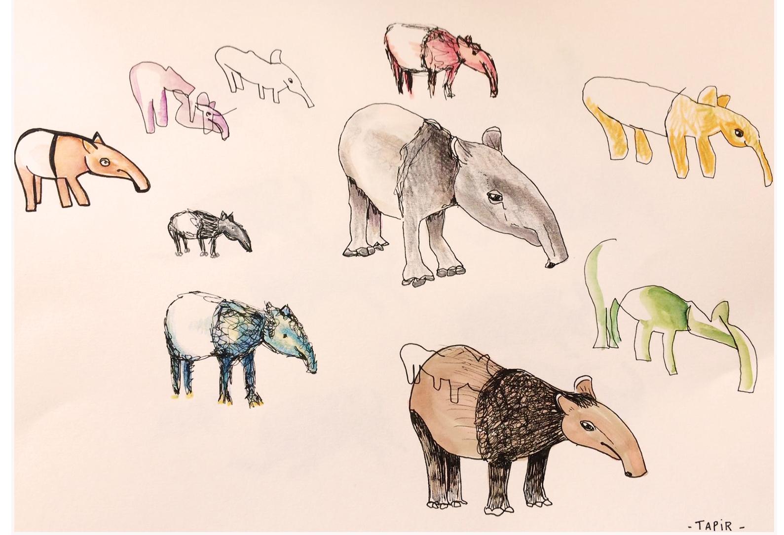 tapir - 2016