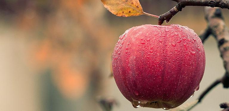 apple-1122537_1920_edited_edited.jpg