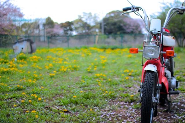 バイク タンポポ 春.jpg
