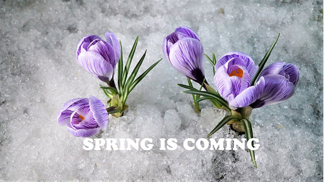Spring is coming FB slider.jpg