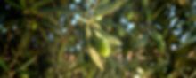 slide_olio_dop.jpg