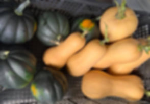 WInter%2520Squash_edited_edited.jpg