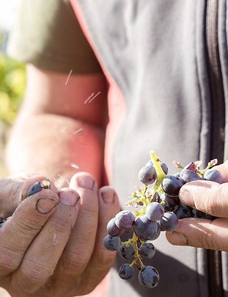 gerler wines