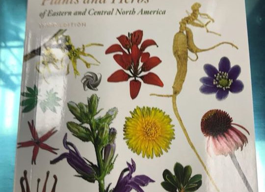 Peterson Field guide to medicinal plants and herbs
