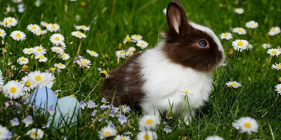 Easter Egg Hunt In Stores!