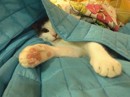 Sassile meeldib magada teki all