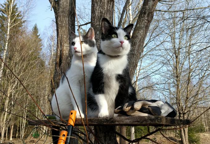 Kassivennad Sass ja Pontsu