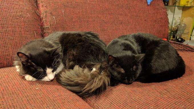 Miku ja Jossu magavad tihti kõrvuti keras