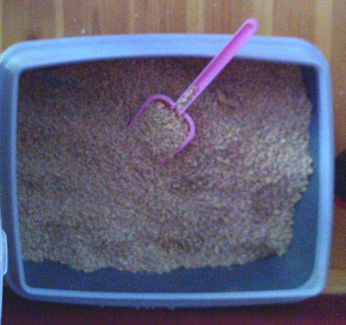 Kassid panid kühvli liivakasti