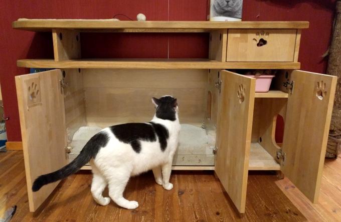 Sass uurib, miks kassikapi uksed kõik lahti on...