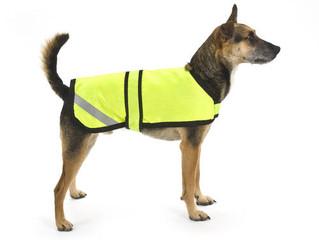 Lemmiklooma turvalisus pimedal ajal