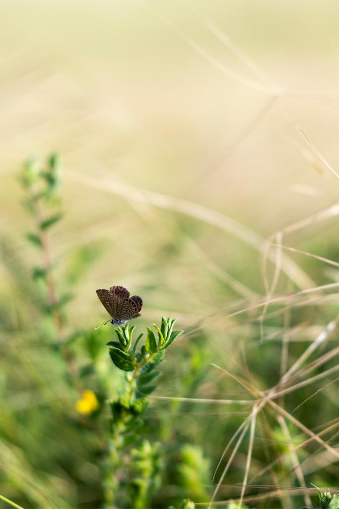 Life around the grasses