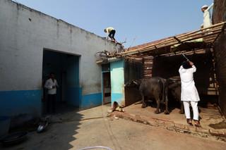 A house with buffalo
