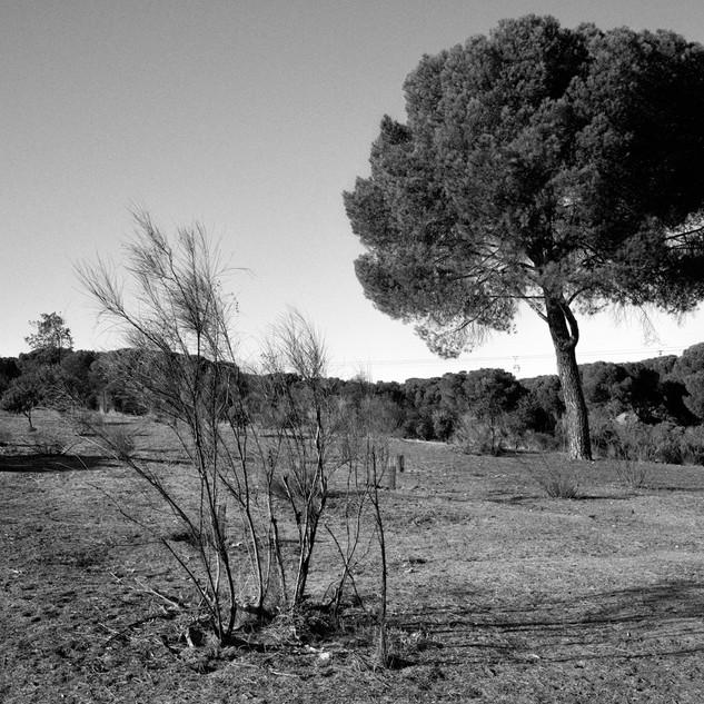 Man altered landscapes