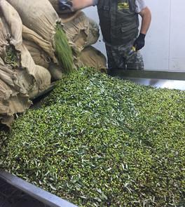 new oliv presseri.jpg