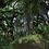 Thumbnail: Real Nature Pack - Tropical / Jungle