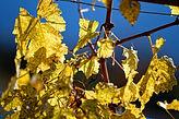 vinothérapie suisse vignoble spa  produi