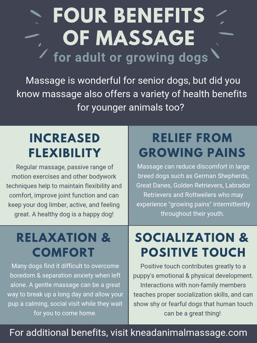 knead animal massage, dog, portland
