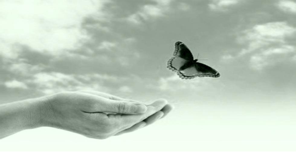Πεταλούδα πετά προς την ελευθερία
