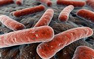 Φυματοβάκιλλοι στο ηλεκτρονικο μικροσκόπιο
