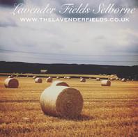 Straw Bales at Lavender Fields, Selborne, Hampshire  2018
