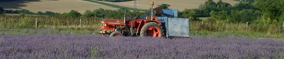 2016-08-01_EHL_farming_lavender.jpg