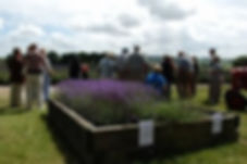 Group visits at The Lavender Fields, Hampshire UK