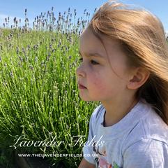 Little Miss Lavender, Summer 2018, Selborne, Hampshire
