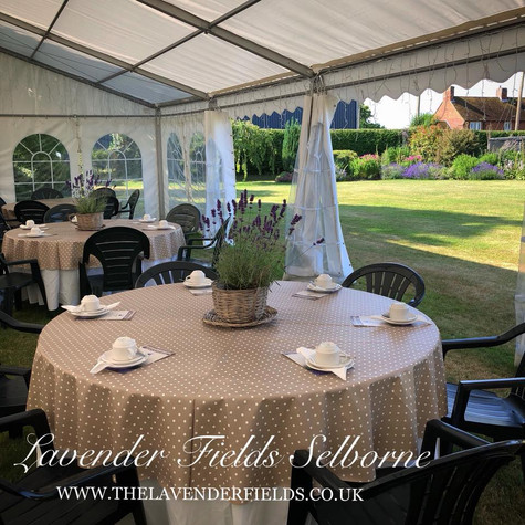 Cream Teas at Lavender Fields, Selborne, Hampshire 2018