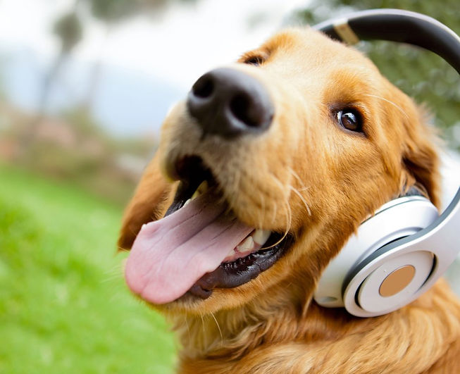 Cute dog listening to music with headpho