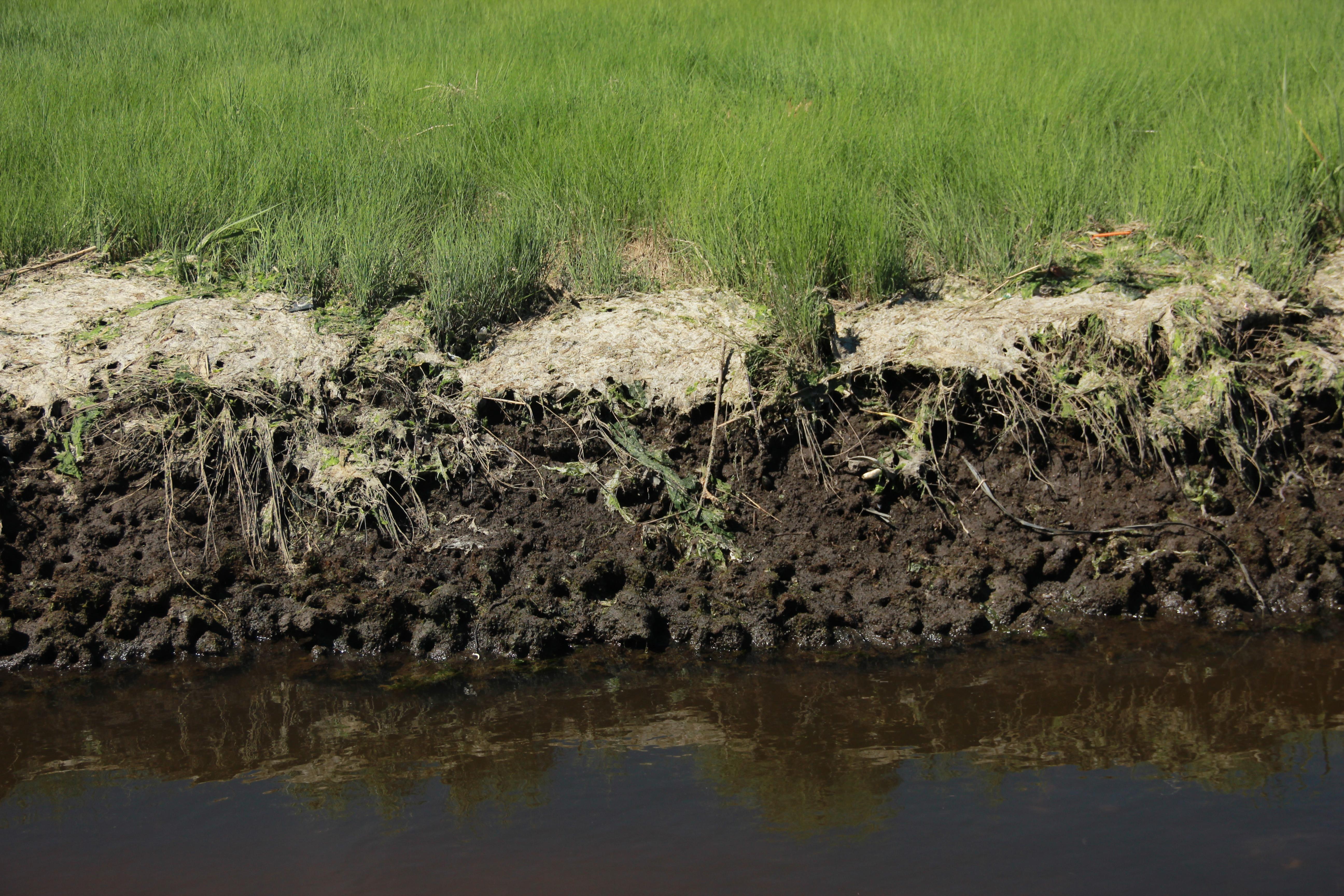 Marsh Bed