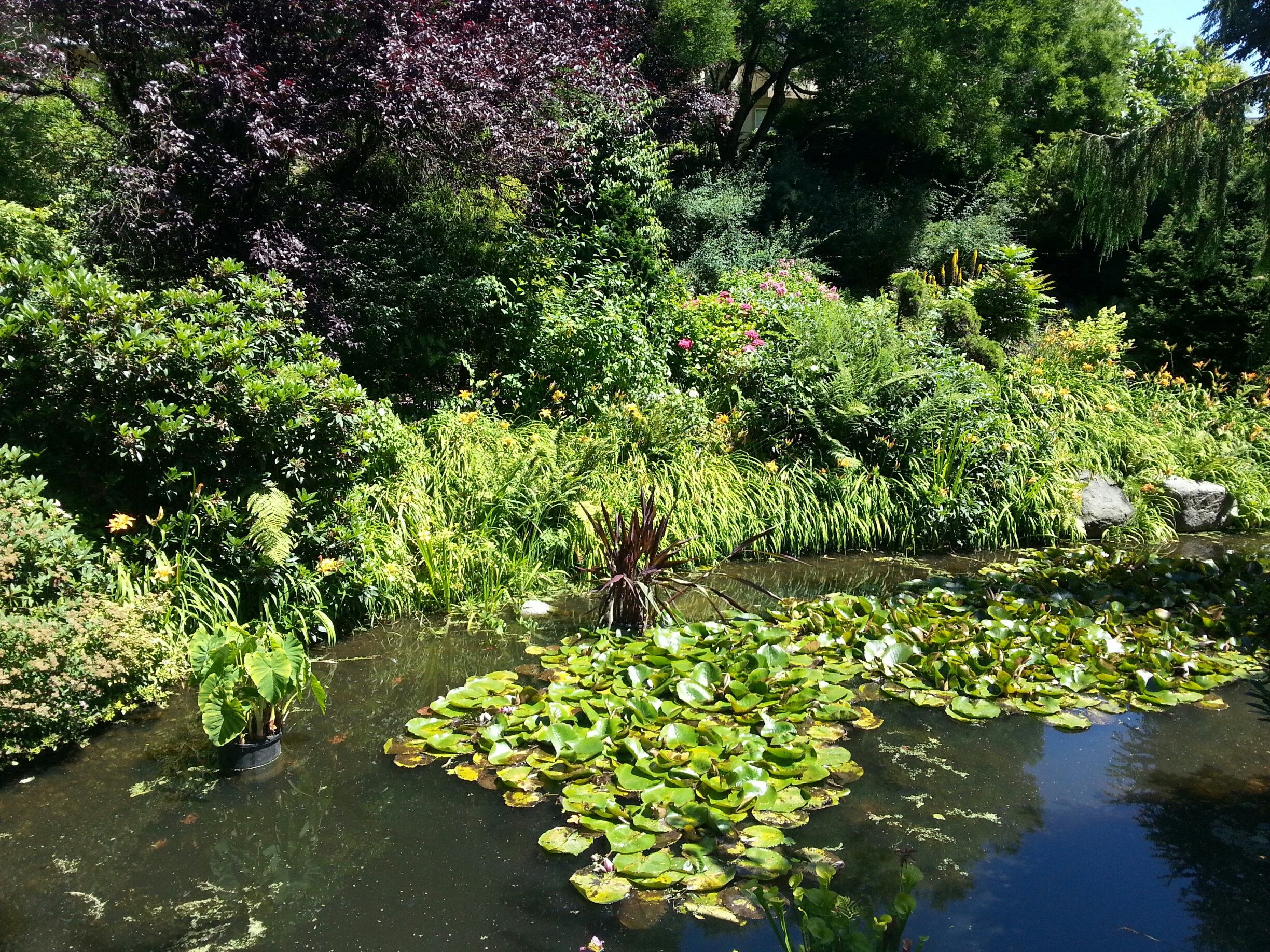 Pond at Glenbrook
