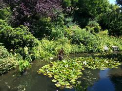 Pond at Glenbrook
