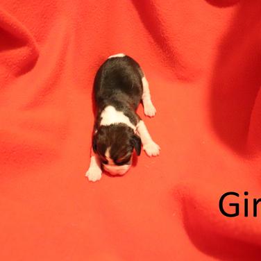Girl 4.png
