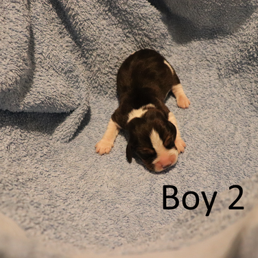 Boy 2.png