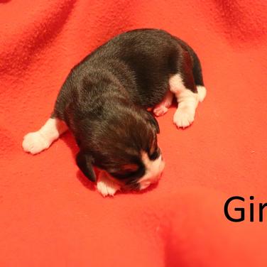 Girl 3.png