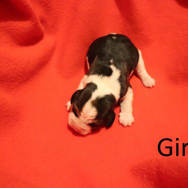 Girl 1.png