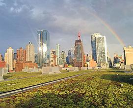 NYCAudubon2018-Javits-Green-Roof_2016-9-