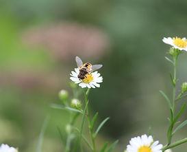 Bug Bee_05_EG.JPG