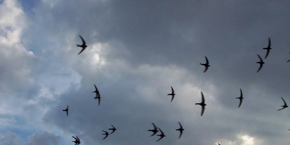 TALK - Save Our Swifts