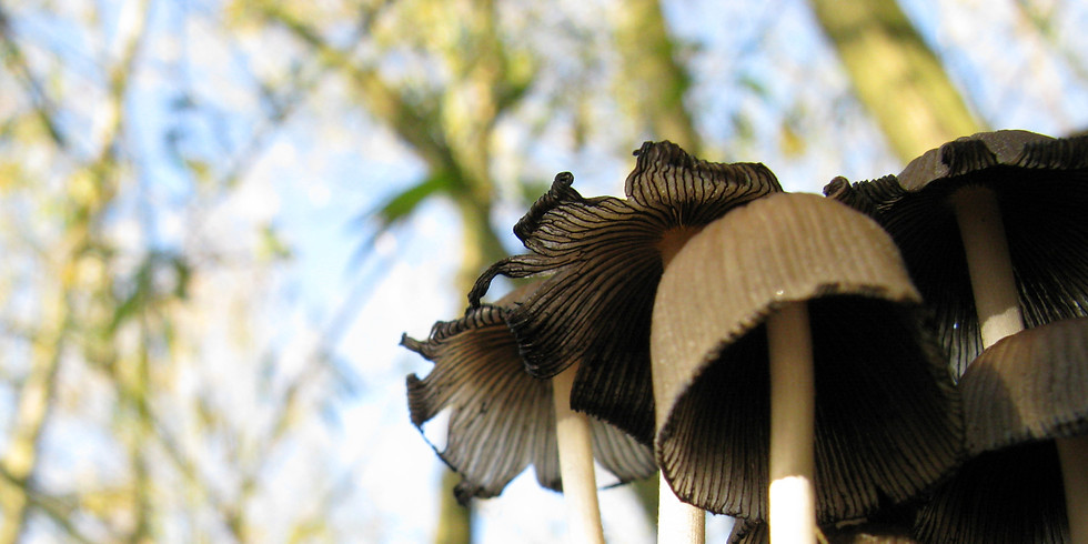 Fungi Walk at Stour Wood, Wrabness