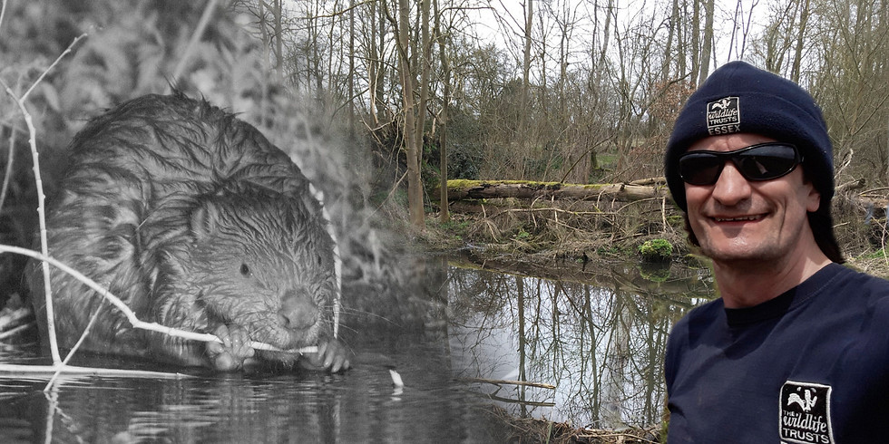 Taming the Flood - The Essex Beaver Project