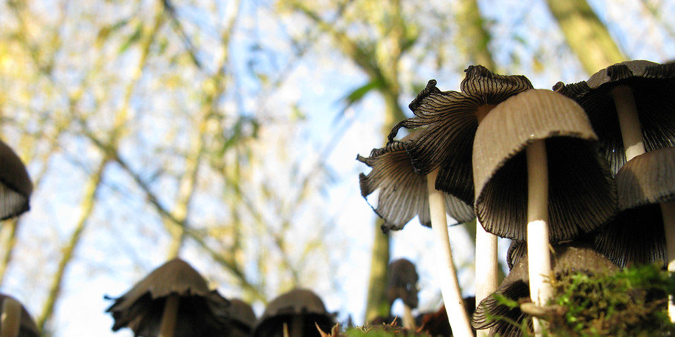 Fungi walk at Highwoods Country Park - Booking essential