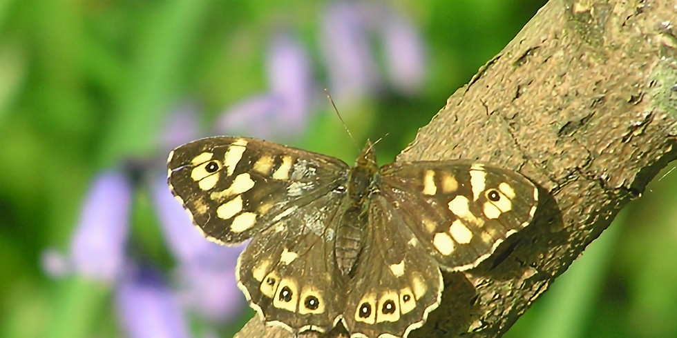 Butterfly walk at Marks Hall