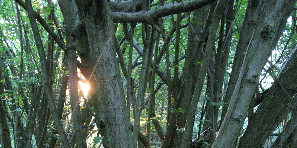Walk through Chalkney Wood