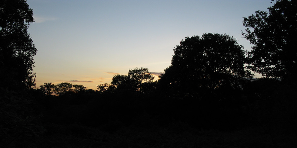 Bats and moths evening